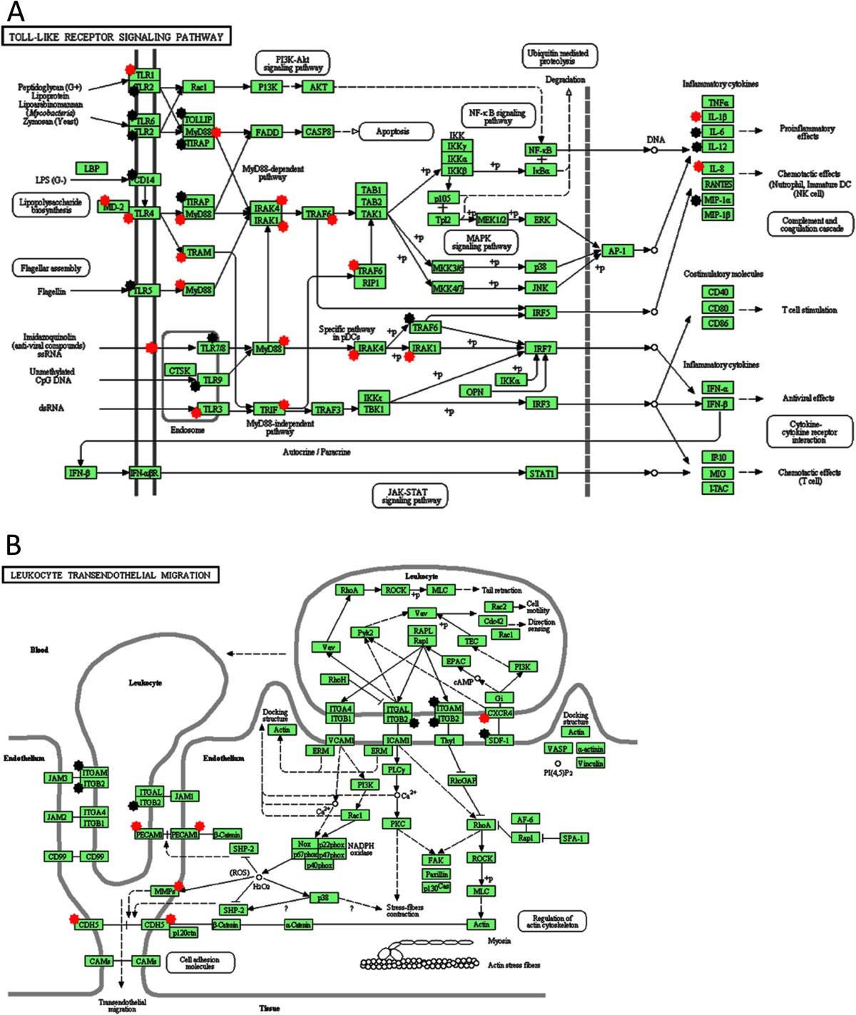 Leukocyte transmigration into tissue-engineered constructs is ... bc698127da7