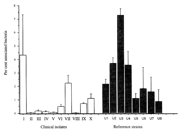 Penetration of Group B Streptococci through Polarized Madin-Darby