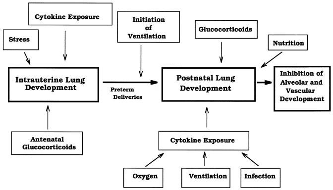 The New BPD: An Arrest of Lung Development | Pediatric Research