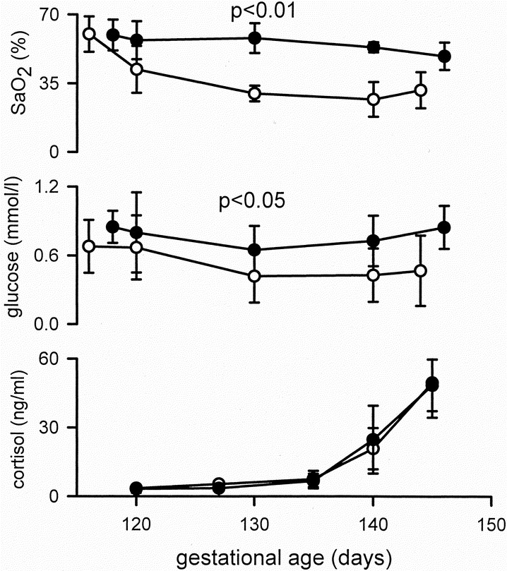 Compromised Respiratory Function in Postnatal Lambs after