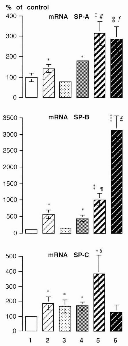 Dexamethasone Potentiates Keratinocyte Growth Factor-Stimulated SP-A