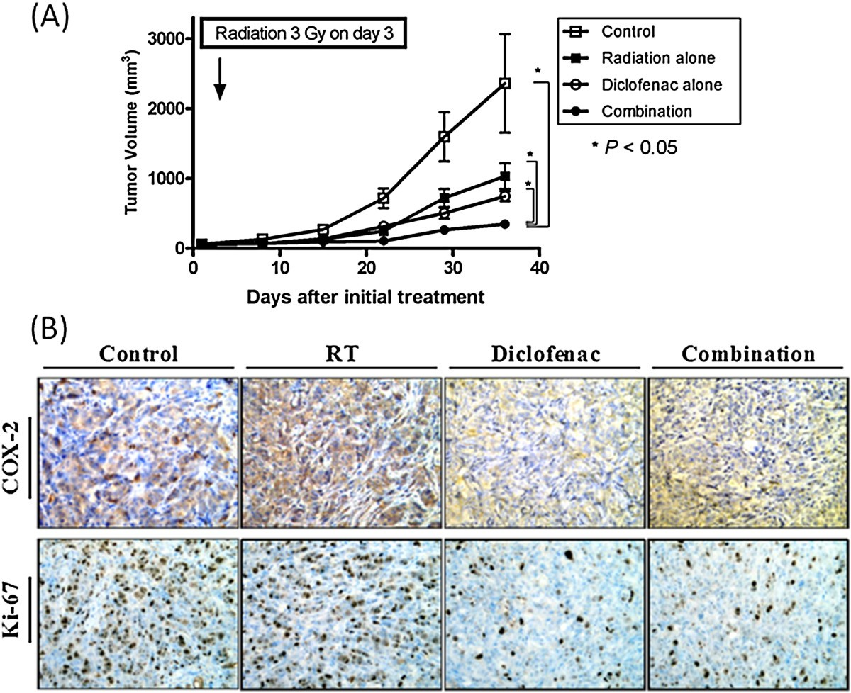 AAV-ARHP8 suppressed tumor growth in LNCaP xenografts