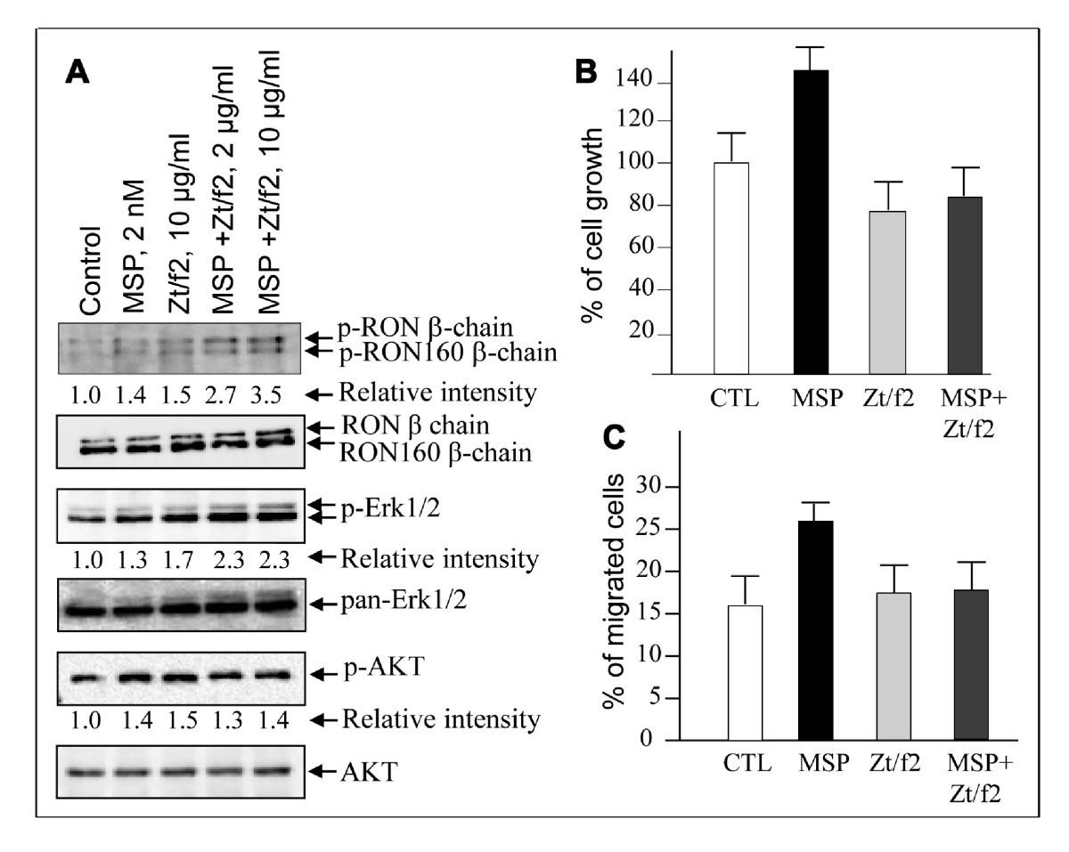 (PDF) Targeting rat anti-mouse transferrin receptor