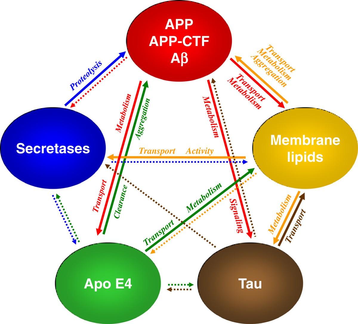 Cross-talk Of Membrane Lipids And Alzheimer-related