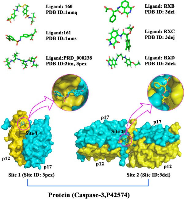 Predicting Target-ligand Interactions Using Protein Ligand