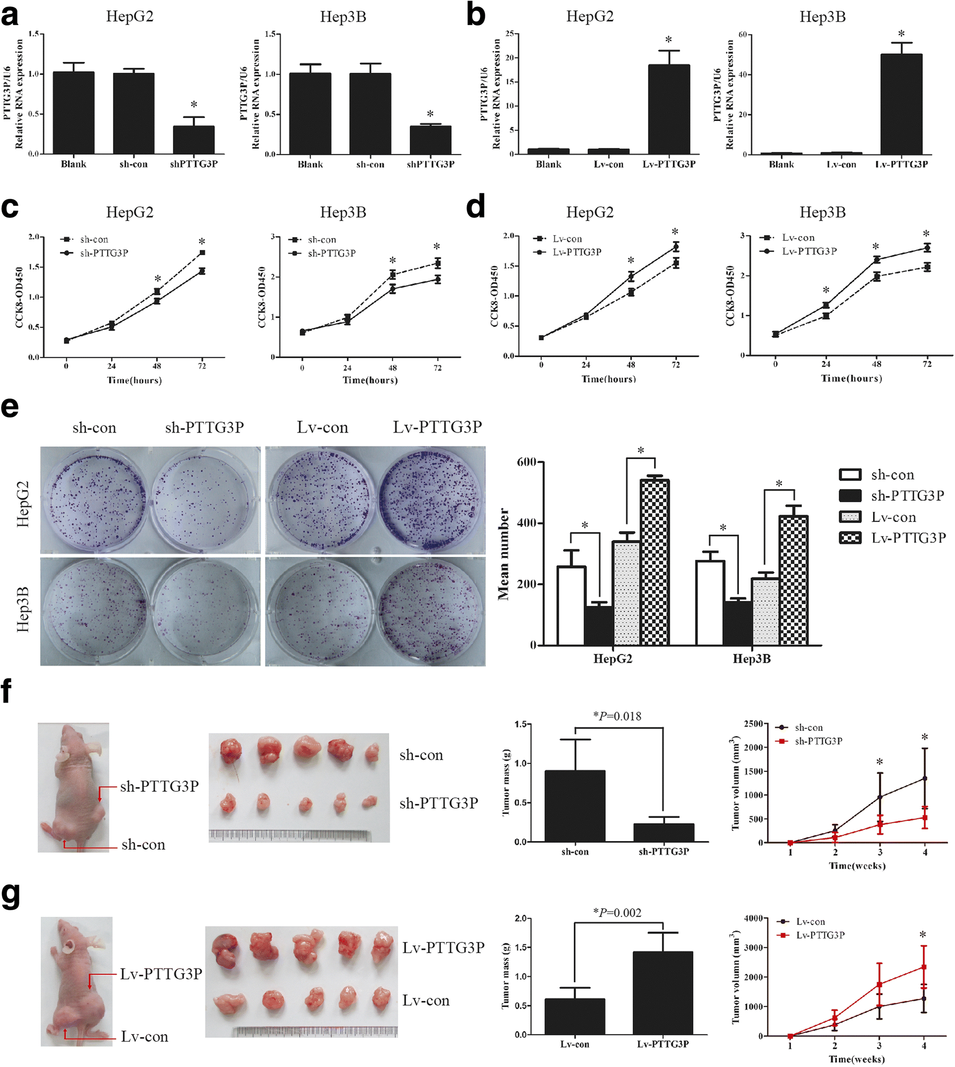CYTOR promotes tumor growth and metastasis in mouse