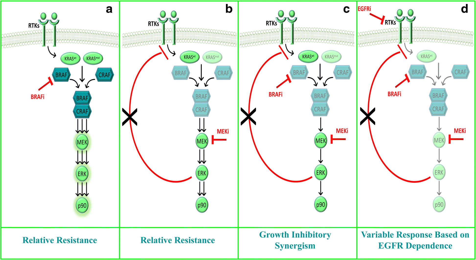 Combined c-MET and MEK inhibition results in apoptosis in