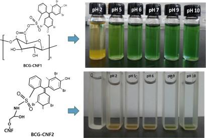 Surface modification of TEMPO-oxidized cellulose nanofibrils for