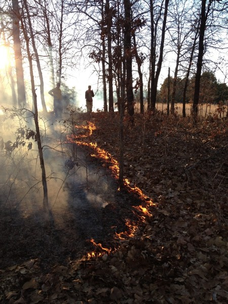 Restoring Fire in Eastern Oak Savannas and Forests