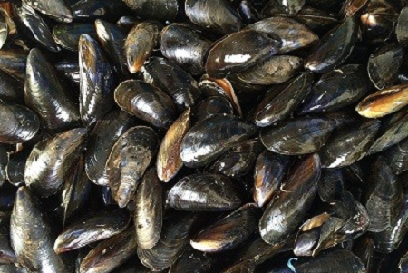 mussels-1665863_1280