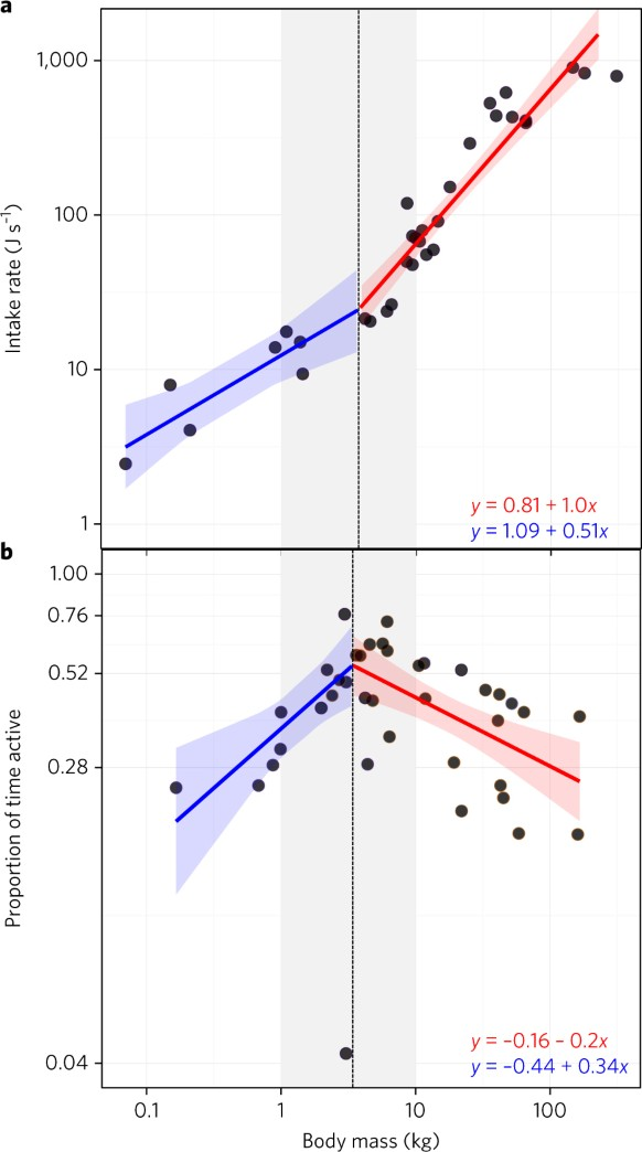 fig 2 observed sizescaling of the energy intake rate and activity proportions among carnivores