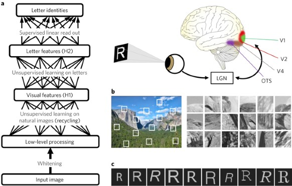 Deep learning architecture and examples of natural image and printed letter data.
