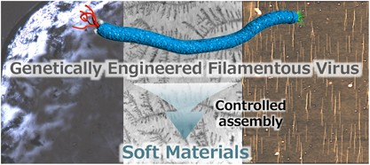 Filamentous virus-based soft materials based on controlled assembly through liquid crystalline formation