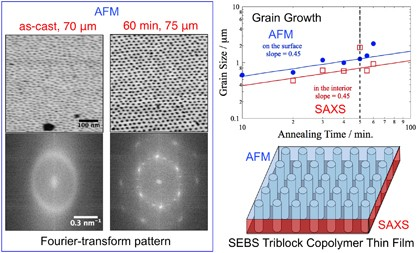 Characterization of the surface morphology and grain growth near the surface of a block copolymer thin film with cylindrical microdomains oriented perpendicular to the surface