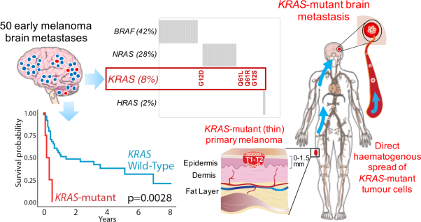 The mutational landscape of melanoma brain metastases presenting as the first visceral site of recurrence