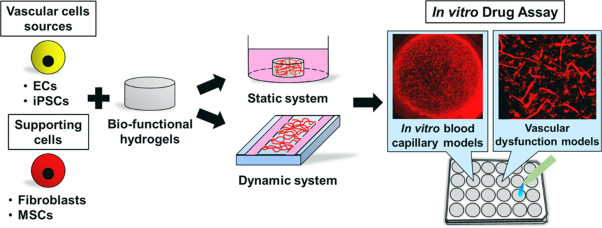 In vitro fabrication and application of engineered vascular hydrogels