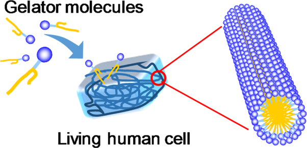 Intracellular self-assembly of supramolecular gelators to selectively kill cells of interest