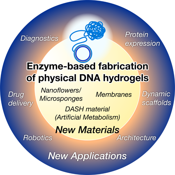 Enzyme-based fabrication of physical DNA hydrogels: new materials and applications