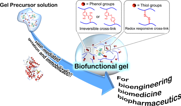 Poly(ethylene glycol)-based biofunctional hydrogels mediated by peroxidase-catalyzed cross-linking reactions