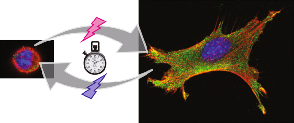 Stimuli-responsive hydrogels as a model of the dynamic cellular microenvironment