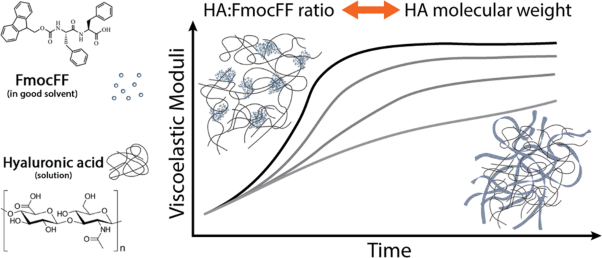 Rheological analysis of the interplay between the molecular weight and concentration of hyaluronic acid in formulations of supramolecular HA/FmocFF hybrid hydrogels