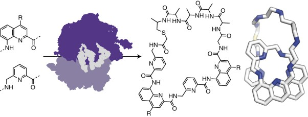 Ribosomal synthesis and folding of peptide-helical aromatic foldamer hybrids