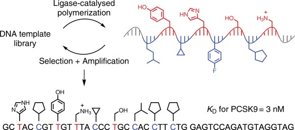 Evolution of sequence-defined highly functionalized nucleic acid polymers