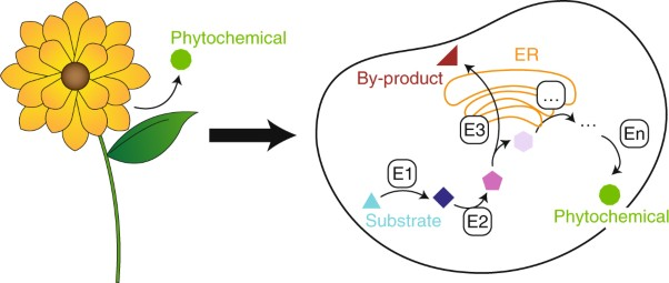Strategies for microbial synthesis of high-value phytochemicals