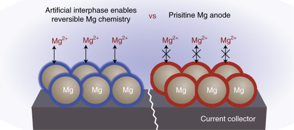 An artificial interphase enables reversible magnesium chemistry in carbonate electrolytes