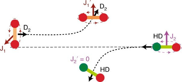 Cold quantum-controlled rotationally inelastic scattering of HD with H<sub>2</sub> and D<sub>2</sub> reveals collisional partner reorientation