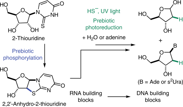 Prebiotic phosphorylation of 2-thiouridine provides either nucleotides or DNA building blocks via photoreduction