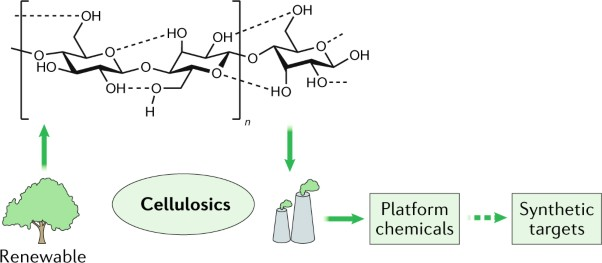 Homogeneous catalysis for the production of low-volume, high-value chemicals from biomass