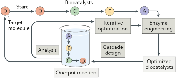 Extending the application of biocatalysis to meet the challenges of drug development