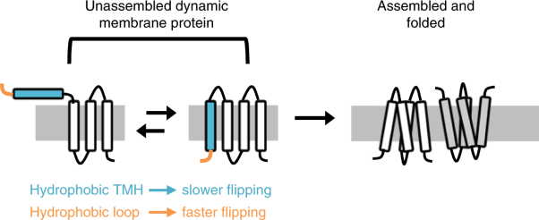 Dynamic membrane topology in an unassembled membrane protein