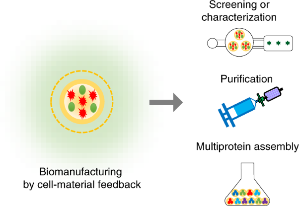 Versatile biomanufacturing through stimulus-responsive cell–material feedback