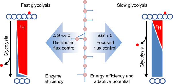 Near-equilibrium glycolysis supports metabolic homeostasis and energy yield