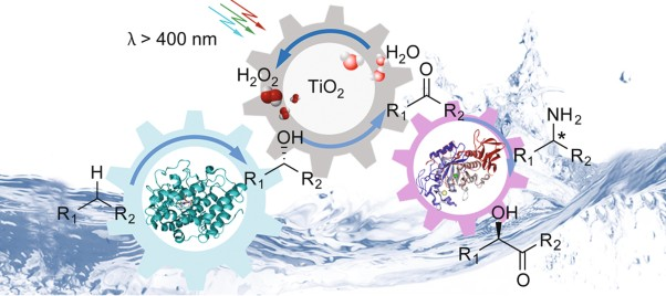 Selective aerobic oxidation reactions using a combination of photocatalytic water oxidation and enzymatic oxyfunctionalizations