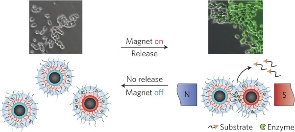 Magnetic field remotely controlled selective biocatalysis