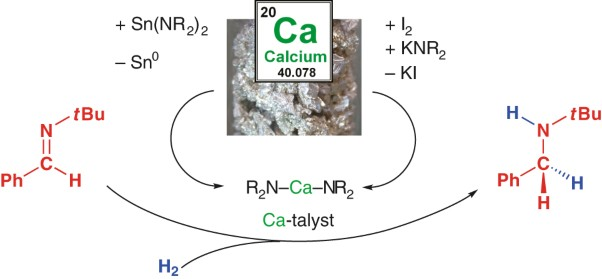 Imine hydrogenation with simple alkaline earth metal catalysts