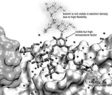 Bioinformatics and molecular modeling in glycobiology   SpringerLink