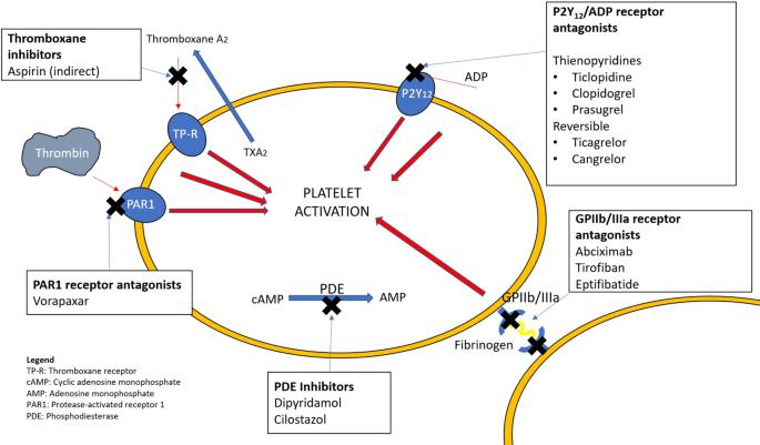 Antiplatelet Drugs for Neurointerventions: Part 1 Clinical Pharmacology |  SpringerLink