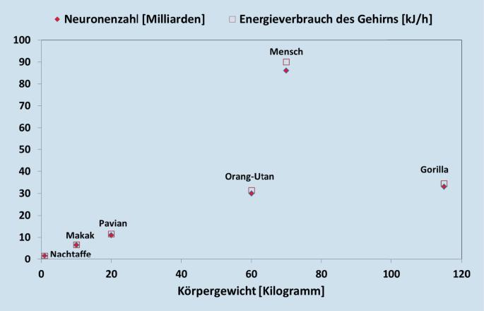 Deutschland penis durchschnitt