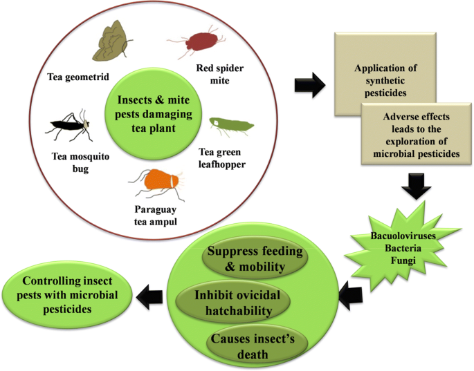 Ecologically controlling insect and mite pests of tea plants with ...
