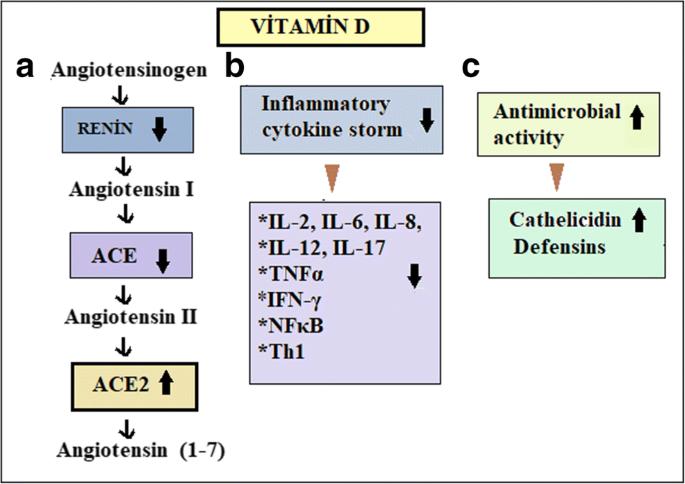 Vitamin D can prevent COVID-19 infection-induced multiple organ damage |  SpringerLink