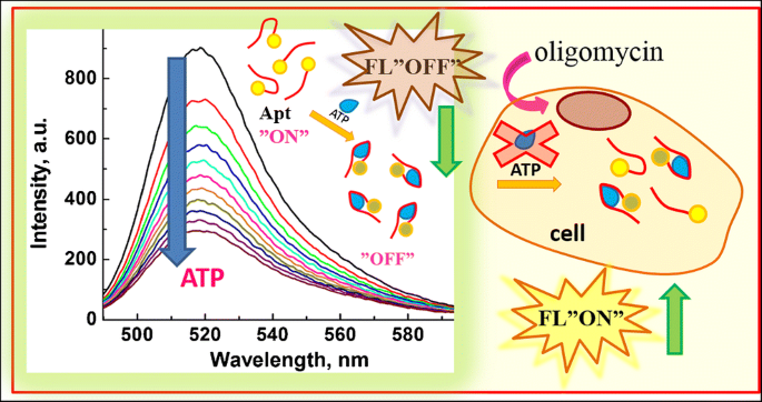 Monitoring Of Dynamic Atp Level Changes By Oligomycin Modulated Atp Synthase Inhibition In Sw480 Cancer Cells Using Fluorescent On Off Switching Dna Aptamer Springerlink