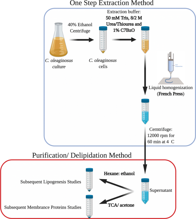 Optimization of protein isolation by proteomic qualification from ...