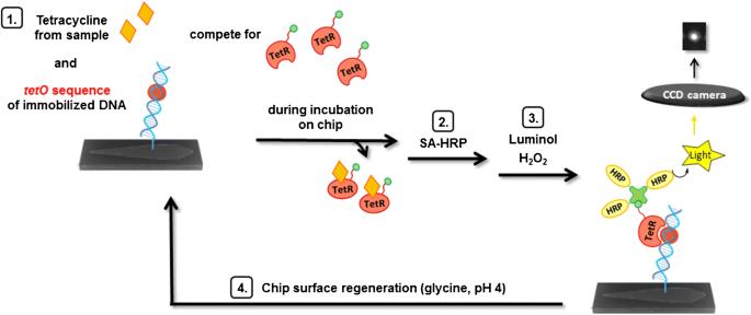 Flow-based regenerable chemiluminescence receptor assay for the ...