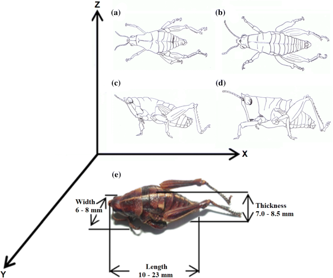 Insects as an alternative source of protein: a review of the ...
