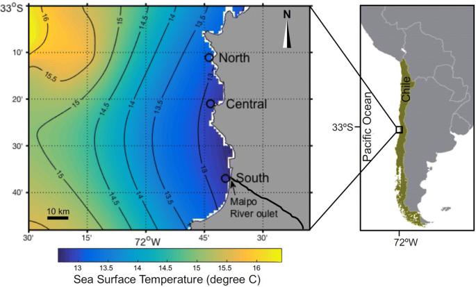 Impacts of reduced inorganic N:P ratio on three distinct plankton ...
