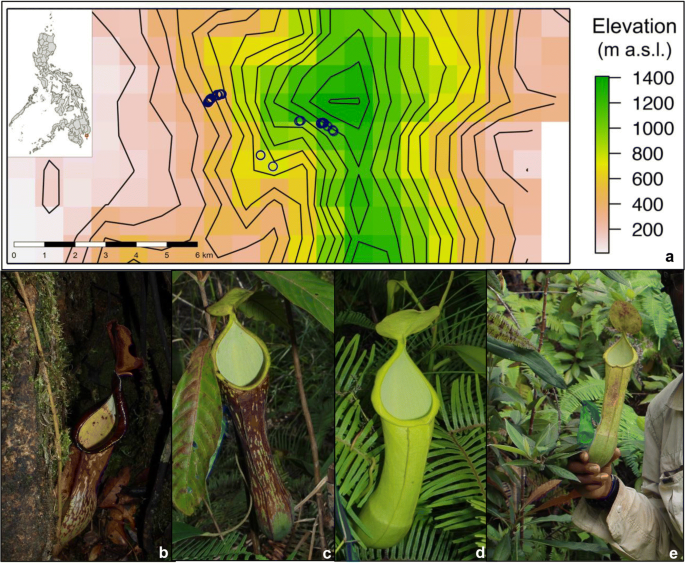 Investigation of an Elevational Gradient Reveals Strong Differences Between  Bacterial and Eukaryotic Communities Coinhabiting Nepenthes Phytotelmata |  SpringerLink
